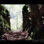 奥多摩の神秘的な森を色濃くしっとりと表現する方法【レタッチ】