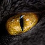 実はかなりキレイ!猫の目を撮ってみよう【マクロレンズ】