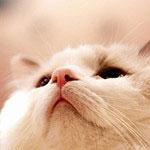 猫写真の撮り方7つの秘訣【動物をうまく撮る方法】