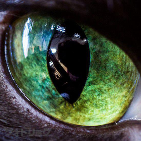 黒猫の緑の目
