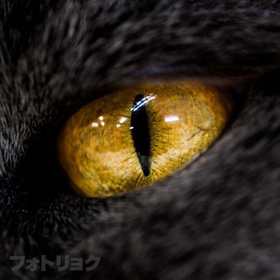 黒猫の黄色い目