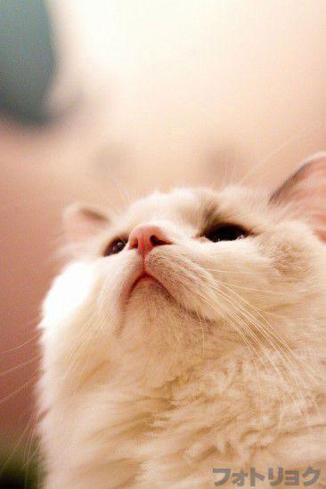 宙を見る白猫
