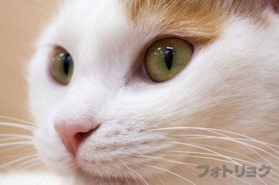 猫マクロ撮影