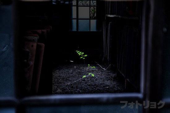 足尾銅山 鉱員社宅廃墟群8
