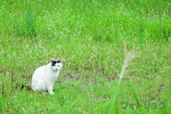 足尾銅山の猫