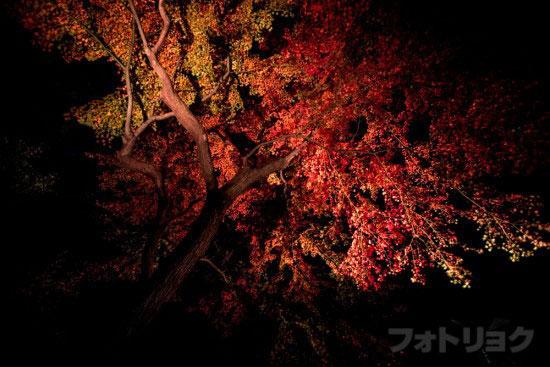 六義園紅葉ライトアップ4