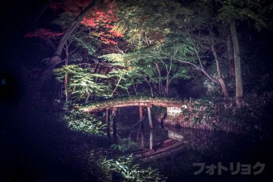 六義園紅葉ライトアップ9