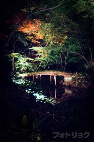 六義園紅葉ライトアップ10