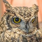 「鳥のいるカフェ」レポートを画像満載でお届け!【東京木場でふくろうが触れるカフェ】