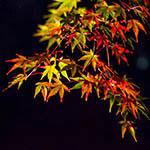 2013六義園の紅葉ライトアップを撮ってきました。【画像13枚】