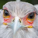 一万円ちょっとで買えちゃう動物園オススメレンズレビュー【SIGMA 70-300mm F4-5.6 DG MACRO】上野動物園で23枚撮ってきました。