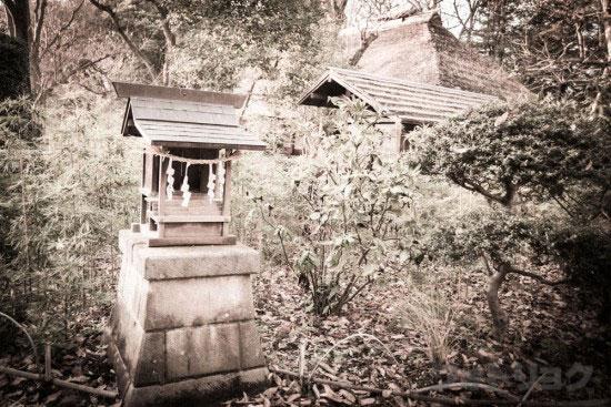 綱島家の裏側