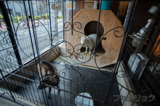 桜丘カフェのヤギスペース