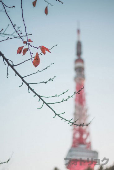 秋の葉っぱと東京タワー