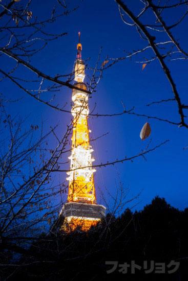 夜空と東京タワー