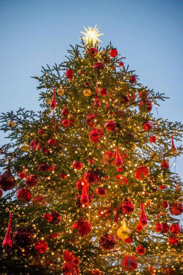 夕方の恵比寿ガーデンプレイスのクリスマスツリー