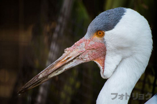 上野動物園柵を消した。