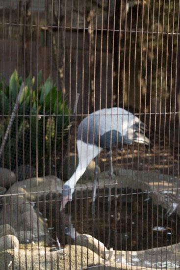 上野動物園さくが写っている