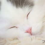 「ねころび」池袋の猫カフェでかわいい写真をガッツリ撮ってきました(`・ω・´)ゞ