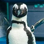 池袋のペンギンの居るバーは意外とゴハンが美味しいのであった