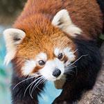 まったりデートと言えば、無料の江戸川区自然動物園コースがオススメ!