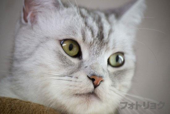 癒やし画像ネコ5
