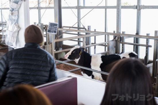 マザーファームツアー牛