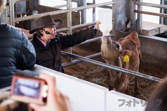 マザーファームツアー牛2