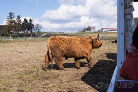 マザーファームツアーでかい牛