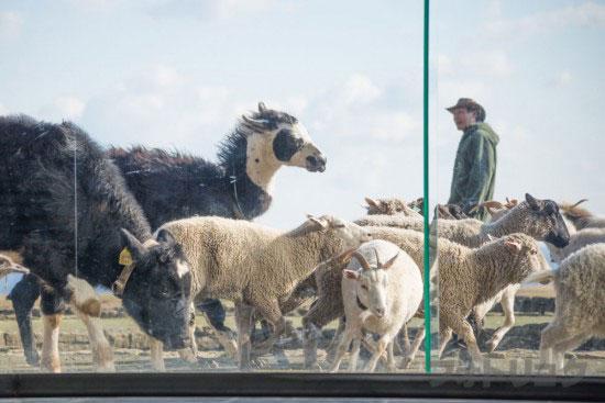 マザー牧場牧羊犬と牧場の仲間たち