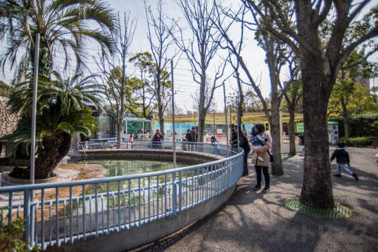 江戸川区自然動物園のペンギン池