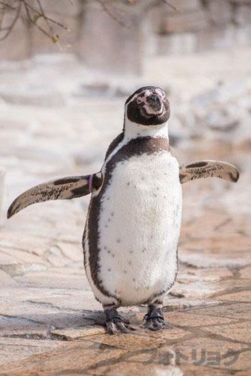 江戸川区自然動物園のペンギン2