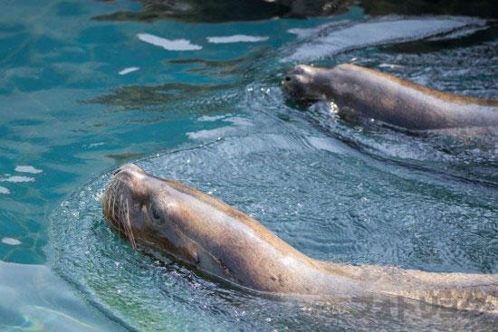 江戸川区自然動物園のオタリア2