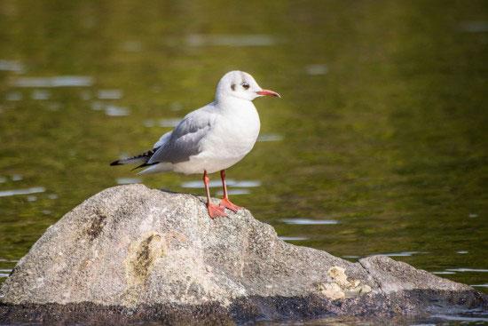 行船公園の白い鳥