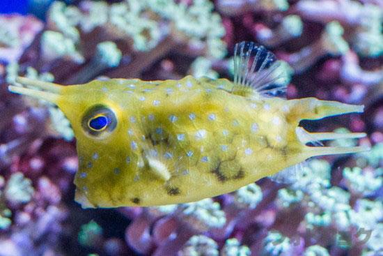 顔の面白い魚3