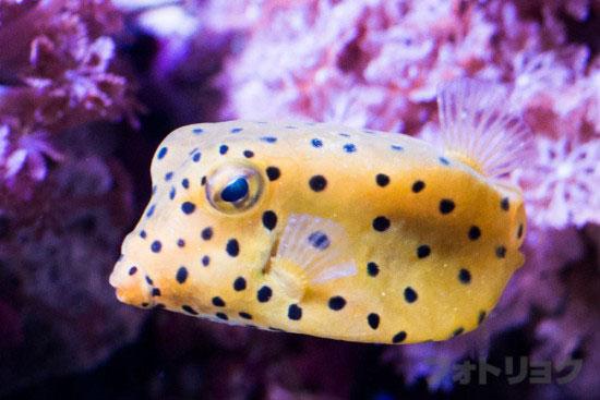 顔の面白い魚4