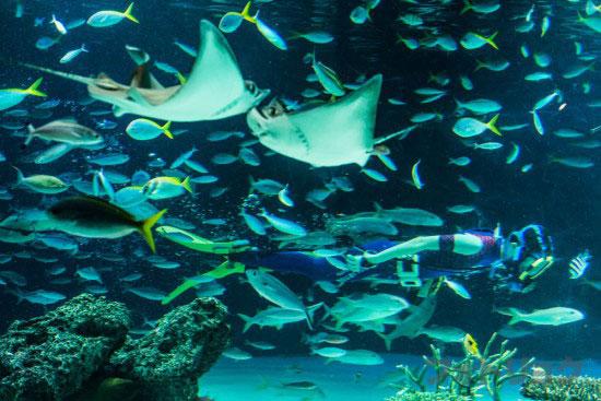 サンシャインラグーンの水中パフォーマンス