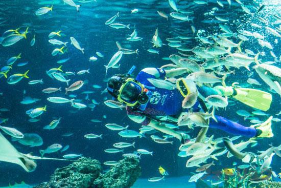 サンシャインラグーンの水中パフォーマンス2