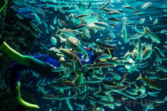 サンシャインラグーンの水中パフォーマンス3