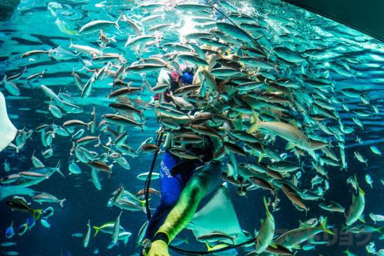 サンシャインラグーンの水中パフォーマンス4