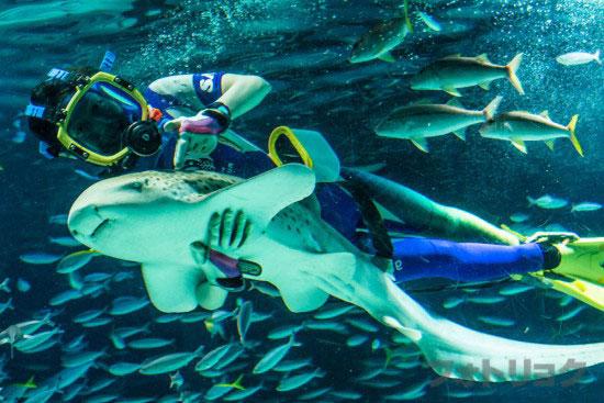 サンシャインラグーンの水中パフォーマンス5