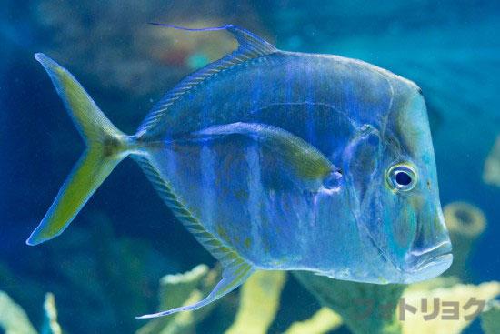 顔の面白い魚1