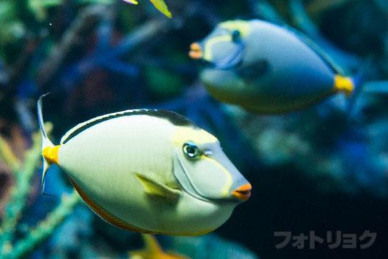 顔の面白い魚2