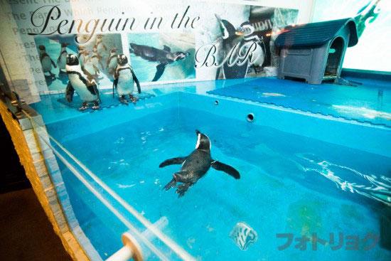 池袋ペンギンの居るバーのペンギン水槽