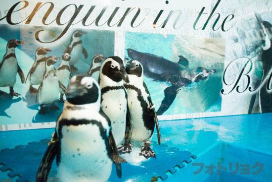 池袋ペンギンの居るバーのペンギン
