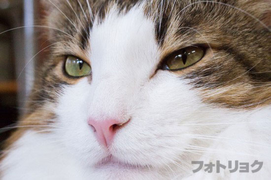 癒やし画像ネコ1