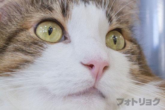 癒やし画像ネコ2