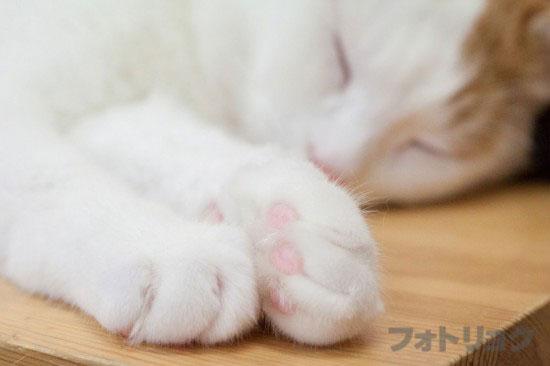 癒やし画像ネコ3